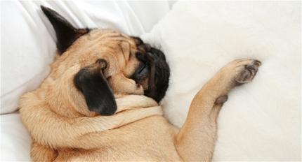 Dažas, iespējams, līdz šim nedzirdētas lietas par miegu
